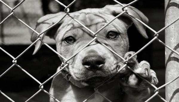 Hayvanların Huzurlu Yaşamaları İçin Ne Yapılmalı ?